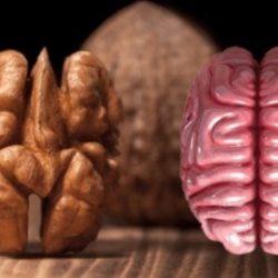 Quali alimenti fanno bene ai nostri organi?